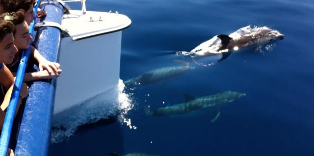 Delfini-Golfo-di-Taranto2.jpg