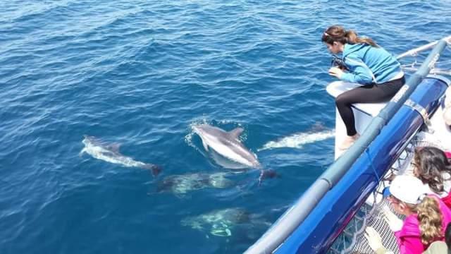 Delfini-Serena-Miccoli-Sartori.jpg